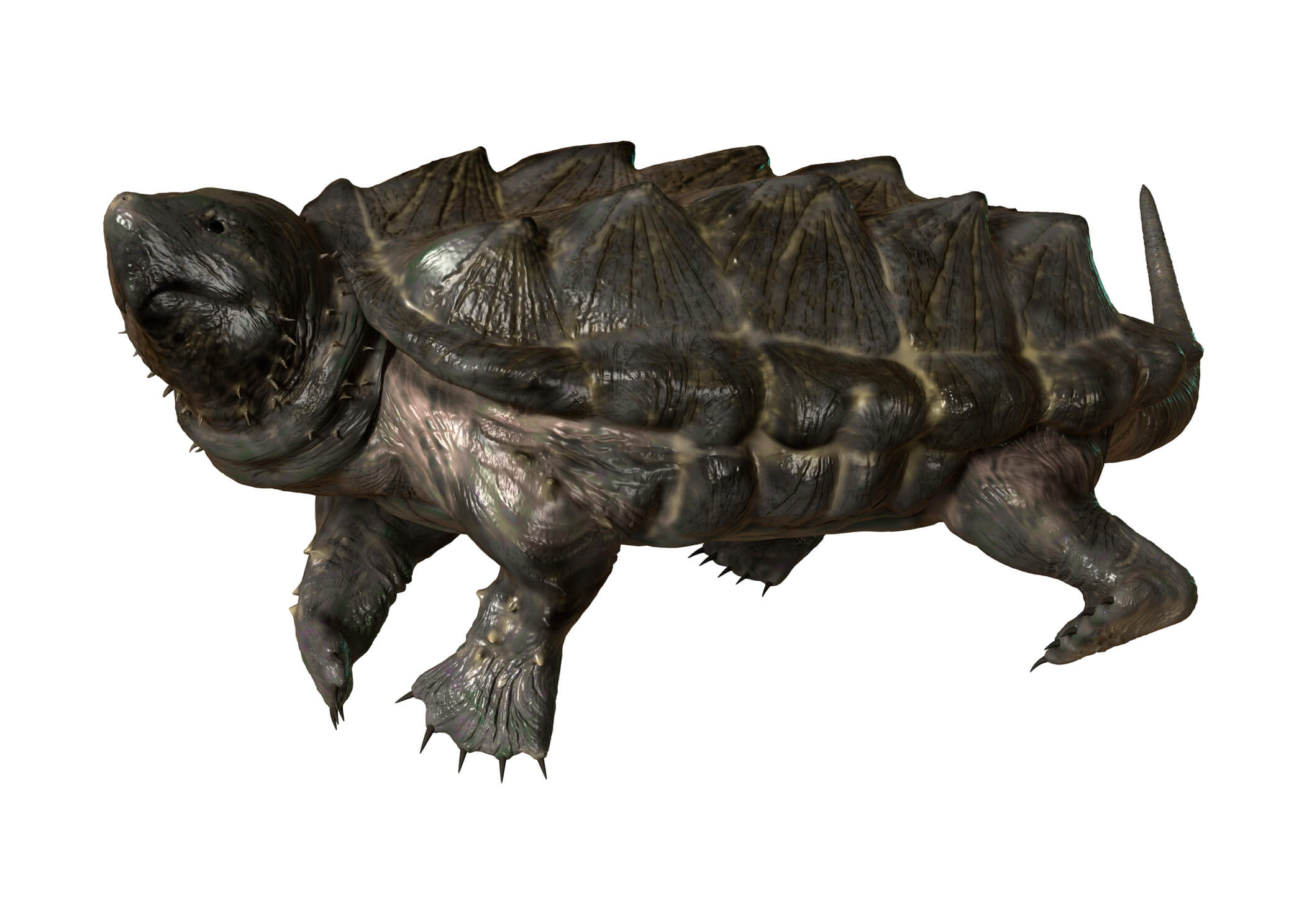 Image of alligator snapping turtle